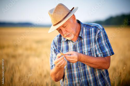 Obraz na plátně  Mature farmer with straw hat checks wheat grain