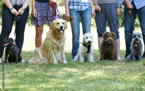 Fotografía  Group Of Dogs With Owners At Obedience Class