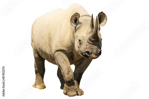 White Rhino Slika na platnu