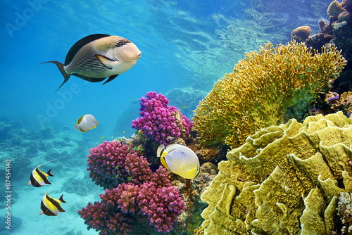 Fotobehang Koraalriffen Underwater scene with coral reef and fish photographed in shallow water, Red Sea, Marsa Alam, Egypt