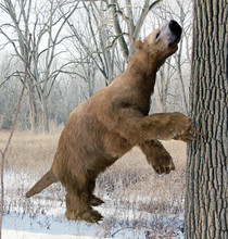 An Illustration Of The Extinct Giant Ground Sloth Megalonyx Searching A Tree For Food In An Ice Age Ohio Forest. Megalonyx Jeffersonii Was A Large, Heavily Built Animal About 9.8 Feet (3 M) Long.