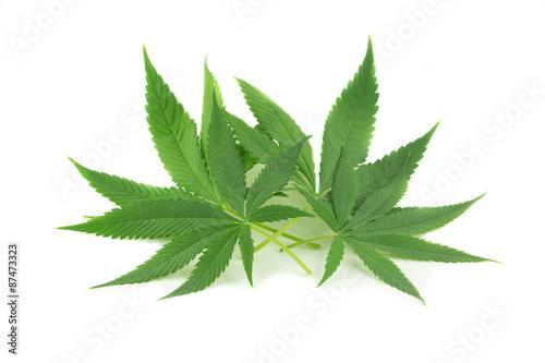 Fényképezés  Foglie di marijuana