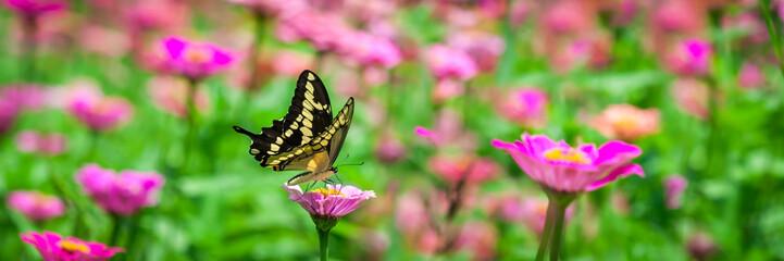 Fototapeta Butterfly On A Flower