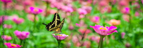 Poster Vlinder Butterfly On A Flower