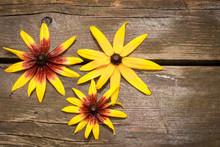 Three Rudbeckia Flowers Top Vi...
