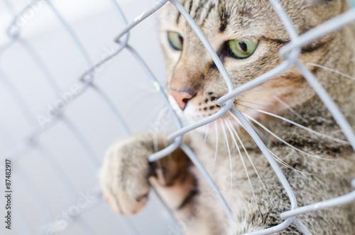 Fotografie, Obraz  Cute cat in the cage