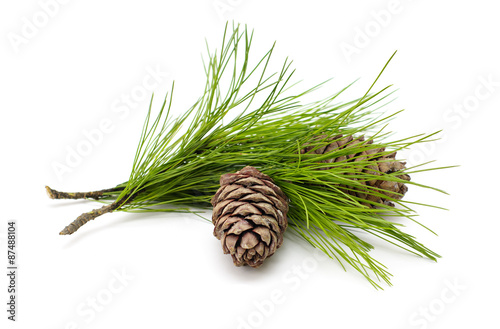 Fototapeta Green coniferous cedar branch with cones on white isolated  obraz