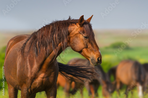 Photo  Portrait of red horse in herd on spring pasture