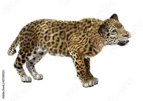 Foto op Aluminium Luipaard Big Cat Jaguar