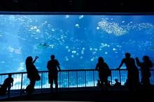 Bigest Aquarium With Silhouett...