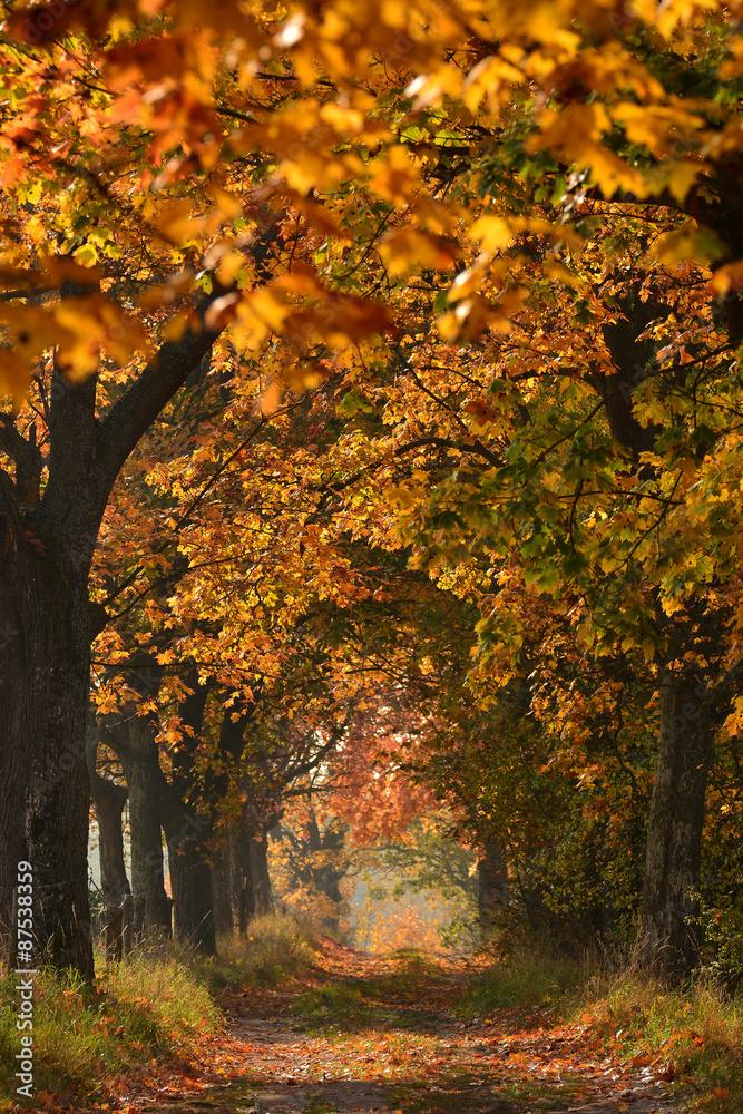 Fototapeta Sunny Autumn country scene