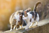 Fototapeta Koty - Two friendly cats