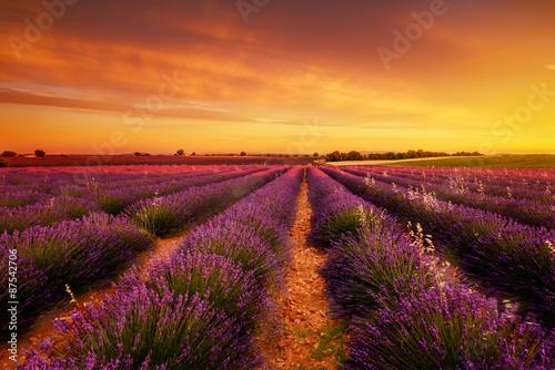 Spoed Foto op Canvas Lavendel Sunset à Valensole
