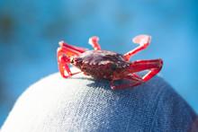 Crab On Fishing Boat On Blue B...