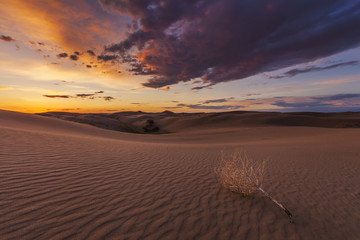 Fototapeta na wymiar Beautiful views of the Gobi desert. Mongolia.