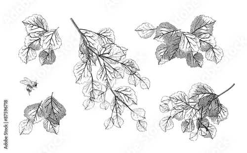 Obraz Tree branch leaves vector set - fototapety do salonu