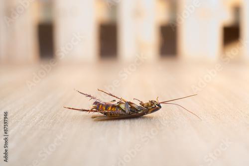 Dead cockroach on wood background