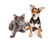 Adorable little happy kitten and mixed breed puppy dog together on a white background