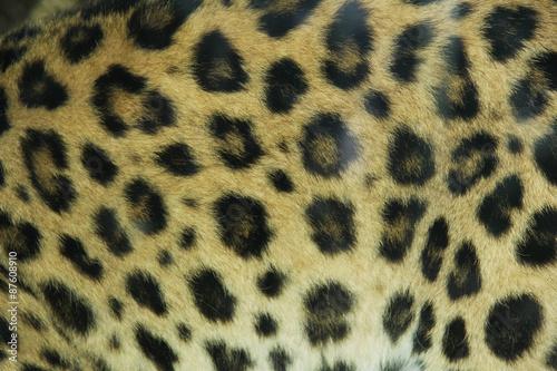 Canvas Prints Leopard leopard pattern