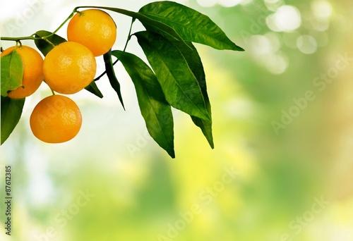 Orange Tree, Orange, Fruit. Tapéta, Fotótapéta