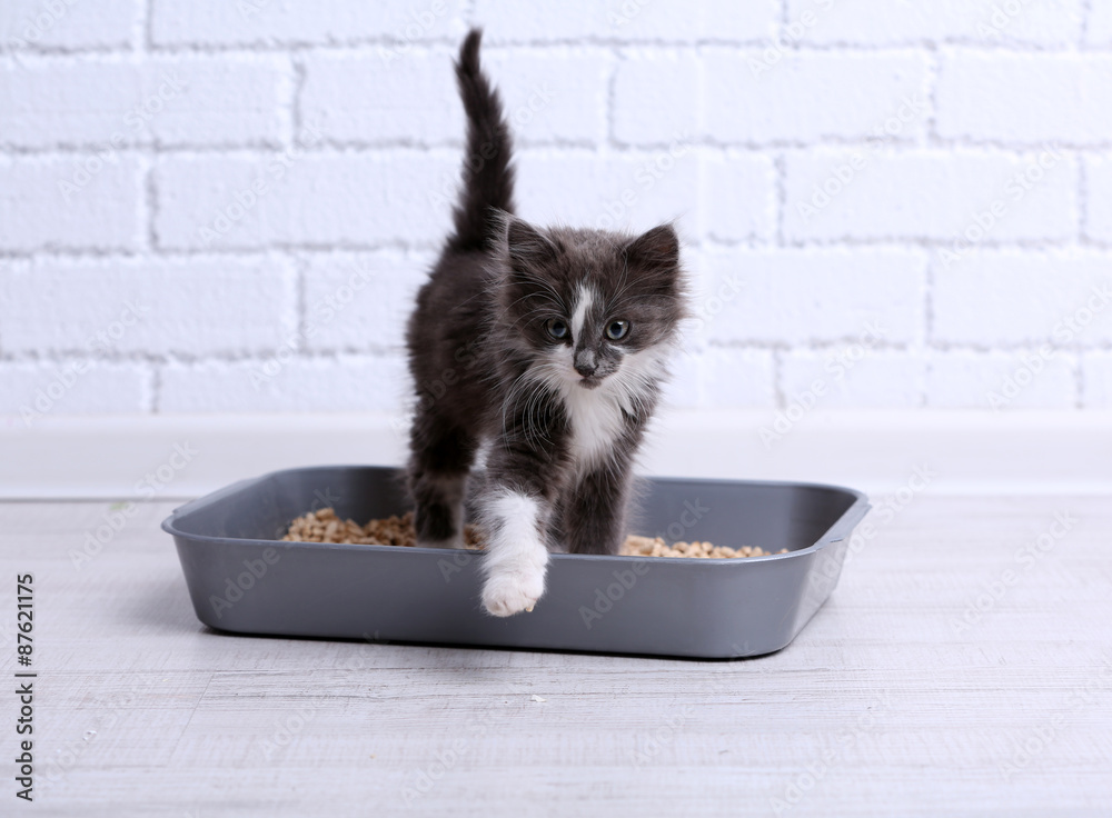 Fototapeta Small gray kitten in plastic litter cat on floor