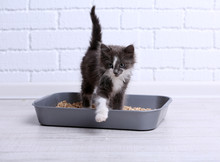 Small Gray Kitten In Plastic L...