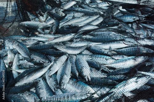Fish in a fishing nets - fototapety na wymiar