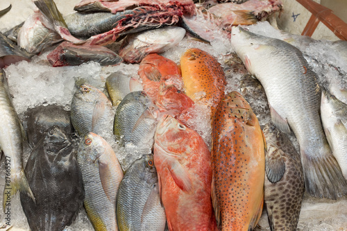 Poster Vis Fresh sea fish in Thailand market on ice for preserve.