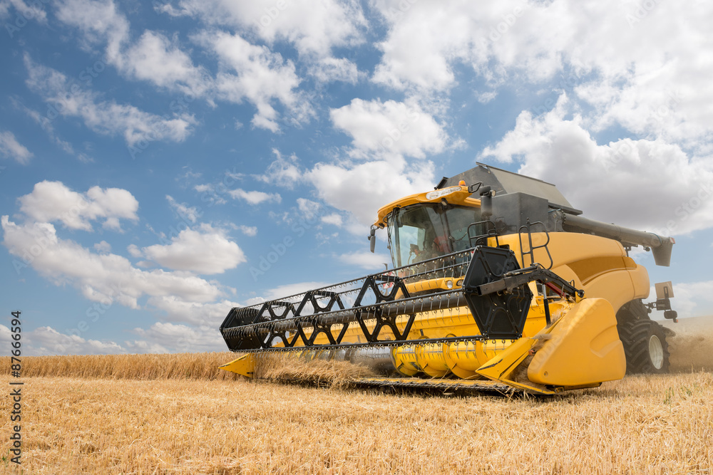 Fototapeta close view of modern combine harvester in action.
