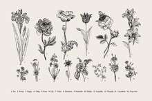 Botany. Set. Vintage Flowers. ...