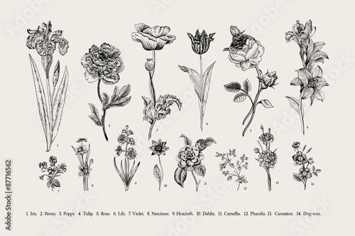 Foto  Botanik