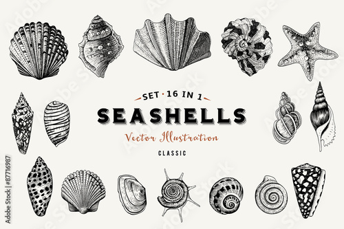 Stampa su Tela Set of vector vintage seashells