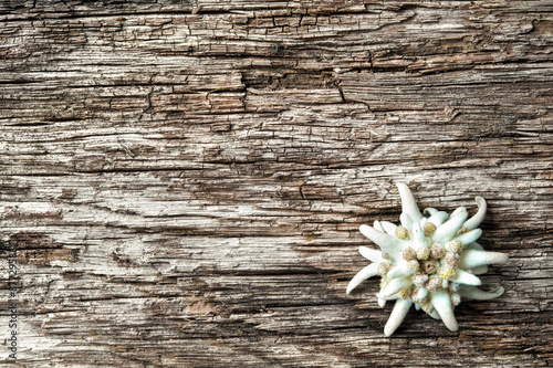 Fotografia  Edelweiss on wooden background