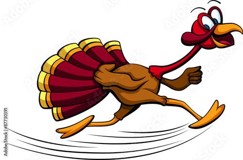 Fotografie, Obraz  Thanksgiving Turkey Running