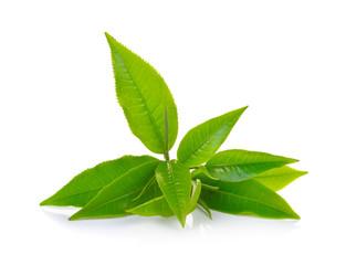 Fototapeta Fresh green tea leaf on white background