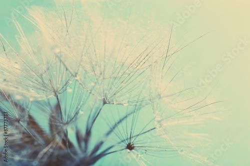 Beautiful dandelion with seeds, macro view #87773733