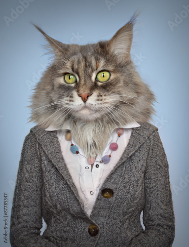 Animaux de Hipster cat in clothes