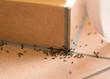 canvas print picture - Ameisenplage