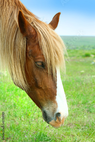 Canvas Prints Horses Beautiful brown horse grazing on meadow