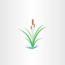 Green Reed Bulrushes Vector De...