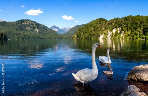 Fényképezés  Лебеди на  озере Альпзее в Баварии