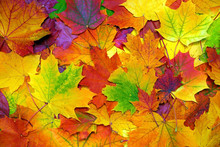Autumn Colorful Leaves Backgro...
