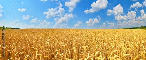 Foto auf Gartenposter Landschappen Wheat field
