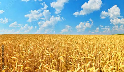 plakat Wheat field