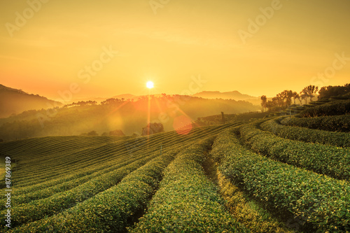 Fotografía Sunrise view of tea plantation landscape at 101 Chiang Rai tea plantation