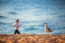 Seagull And Woman Running On T...