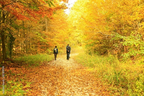 Foto op Canvas Herfst Hikers in the fall forest