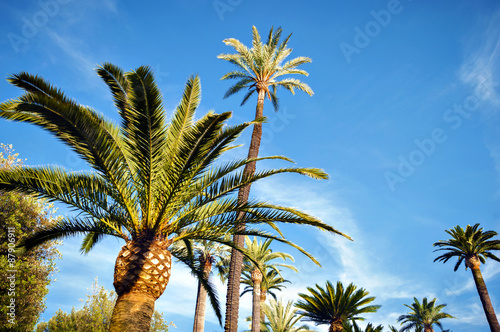 Poster Palm tree California