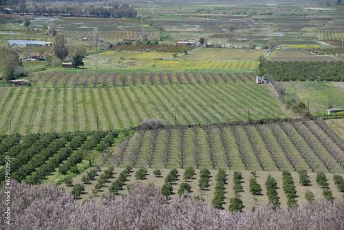 Papiers peints Vignoble Felder bei Selcuk, Türkei