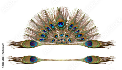 Photo sur Aluminium Paon Peacock feathers on white background
